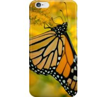 Monarch Butterfly on Goldenrod iPhone Case/Skin