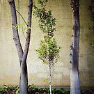Tree-O! by Kevin Bergen