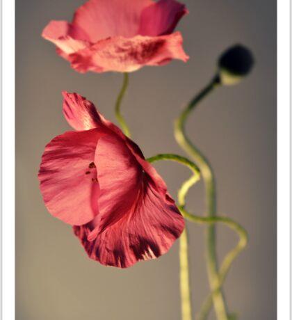 Pink poppies composition Sticker
