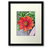 Push a little daisy Framed Print
