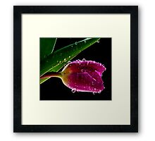 Fresh Tulips Framed Print