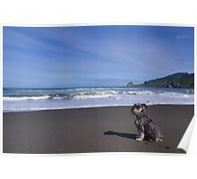 Fritzel at the beach Poster