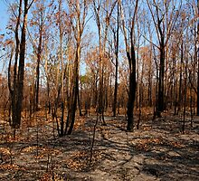 Blackened trees and bushland after bushfire by Leah-Anne Thompson