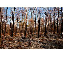 Blackened trees and bushland after bushfire Photographic Print