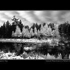 Tamarack Monochrome Poster by Wayne King