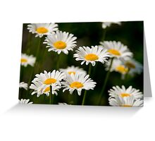 Oxe-eye Daisy Greeting Card