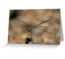 Common Flatwing Greeting Card