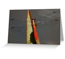 Fiery Skimmer Greeting Card