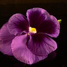 Purple Pansy by Tom Newman