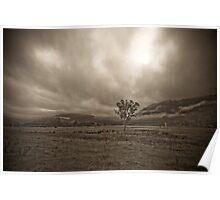 Lone Tree, Pyengana NE Tasmania Poster