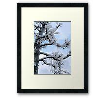 Freezing Tree Framed Print