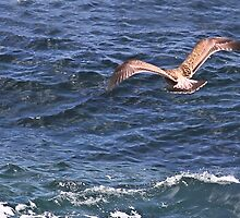 Soaring Over the Pacific by heatherfriedman