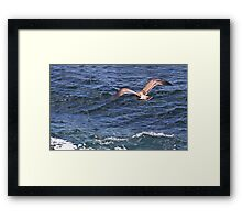 Soaring Over the Pacific Framed Print