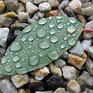 Leaf + Stone + Water. by Cat  Davison