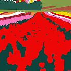 Tulip Colour Bloom by Richard Klekociuk