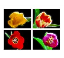 Fractal Foursome Photographic Print