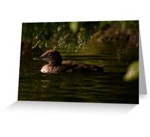 Common Loon Baby Greeting Card