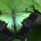 Green on Green by sarah ward
