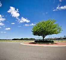 roundabout tree by Martin Pot