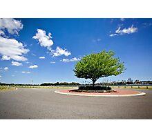 roundabout tree Photographic Print