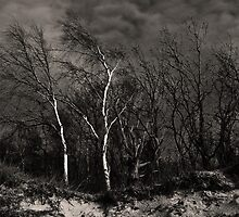 Ghost Trees by Kofoed