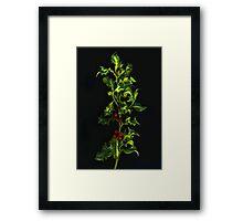 Sprig of Holly Framed Print