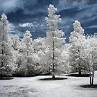 Trees (Infrared) by Vicky Hamilton