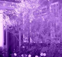 Vera's Hideaway, purple Sticker
