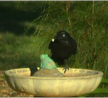 Crow with a piece of bread Photographic Print