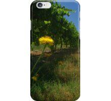 daisies between the vines iPhone Case/Skin