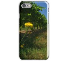daisies between the vines iPhone Case/Skin