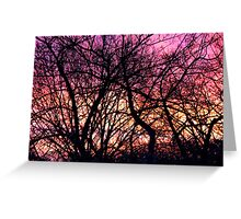 Sunrise Through  Winter Branches Greeting Card