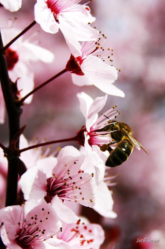 Spring Blossom by JimFilmer