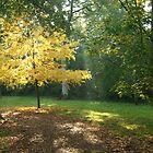 Wesonbirt Arboretum by NalaRewop
