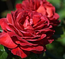 Wonderfully Red Roses by Joy Watson