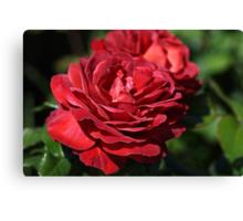 Wonderfully Red Roses Canvas Print