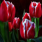 tulips by Devon Mallison