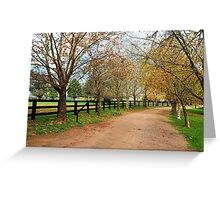 Deciduous tree lined country road in Autumn Greeting Card