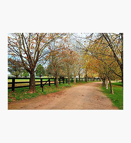 Deciduous tree lined country road in Autumn Photographic Print