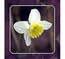 First Daffodil Photographic Print