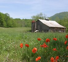 Memorial Day Barn by Donna Sherwood
