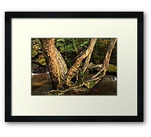 Carved Love Tree Framed Print