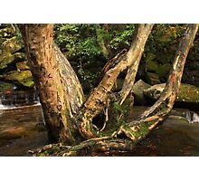 Carved Love Tree Photographic Print