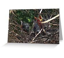 The Hatchlings  Greeting Card
