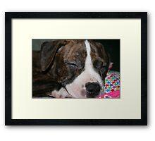 My Pit Bull Puppy Framed Print