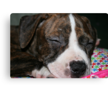 My Pit Bull Puppy Canvas Print