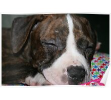 My Pit Bull Puppy Poster