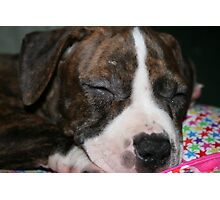 My Pit Bull Puppy Photographic Print