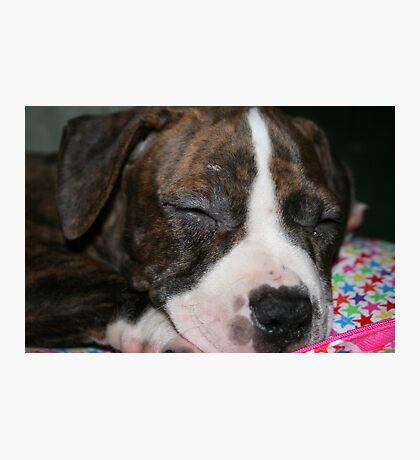 My Pit Bull Puppy Photographic Print