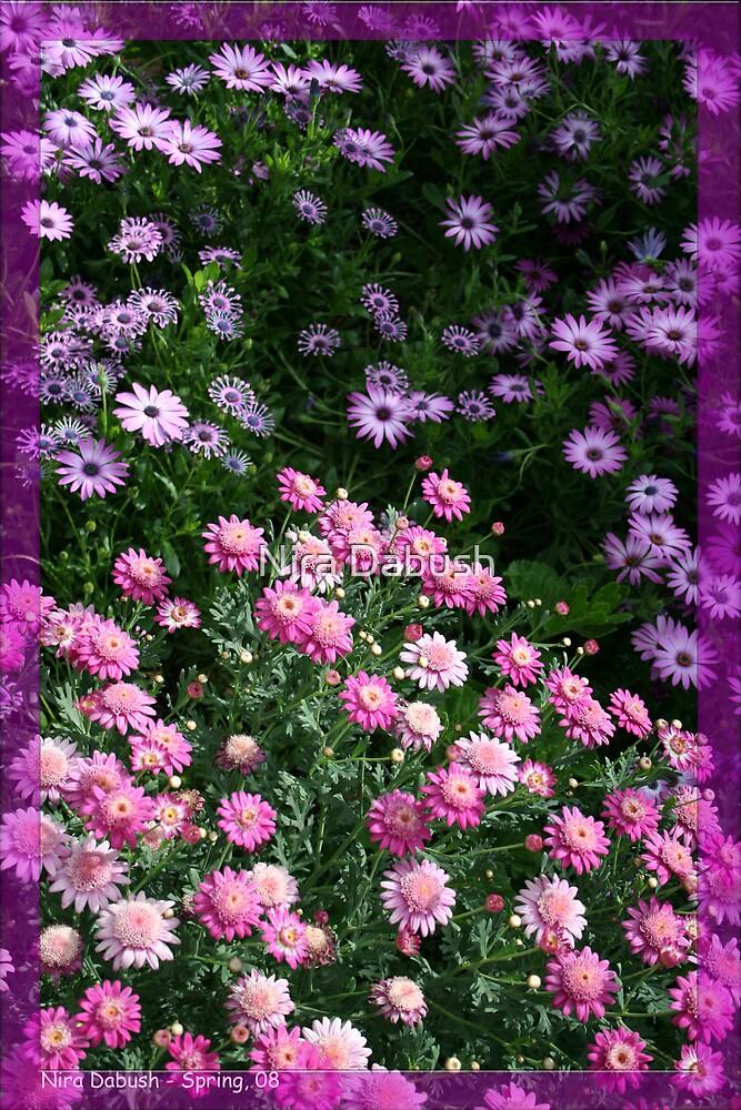 When Pinks Meets Purples by Nira Dabush
